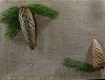 Sack cloth background with fir cones Royalty Free Stock Image