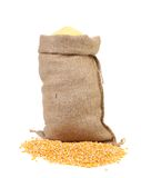 Sack with corn grains and flour. Stock Image