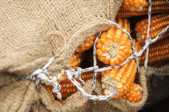 Sack of corns Stock Photos