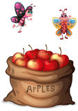 A sack of crunchy apples. Illustration of a sack of crunchy apples on a white background Royalty Free Stock Images