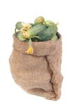 Sack of cucumbers isolated on white Royalty Free Stock Photos