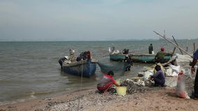 Sack-Fischer, welche die Barkasse Fang-Boots-Netz-See-Marine Reptiles Gulf Of Siams Thailand entlädt das Arbeiten sortieren stock video