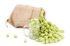 Sack of fresh hops. Royalty Free Stock Image