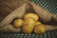 Sack fresh organic potatoes Stock Images