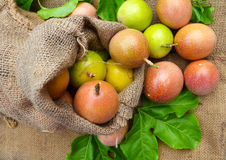 A sack of fresh passion fruits Royalty Free Stock Photos
