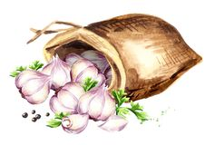 Sack with garlic. Watercolor hand drawn illustration, isolated on white background.  Stock Images