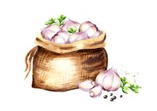 Sack with garlic. Watercolor hand drawn illustration isolated on white background.  Royalty Free Stock Images