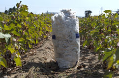 A sack of harvested cotton in a cotton field. Under sunlight Stock Images