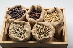 Sack Kaffeebohnen Beim landwirtschaftlichen Nordthailand Stockbilder