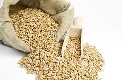 Sack mit Weizen Stockfoto