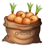 A sack of onion Royalty Free Stock Images