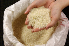 Sack of rice Stock Image