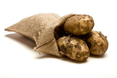 Sack of Spuds. Sack of new Potatoes from low perspective isolated against white background Royalty Free Stock Image