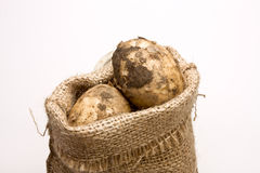 Sack of Spuds. Sack of new potatos from low perspective isolated against white background Royalty Free Stock Image