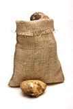 Sack of Spuds. Sack of new Potatoes from low perspective isolated against white background Royalty Free Stock Images