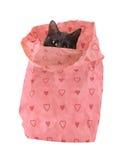 Sack voll Liebe - eine schwarze Katze, die aus einer Papiertüte heraus späht Lizenzfreies Stockbild