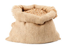 Sack of wheat grains bag Royalty Free Stock Image