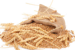 Sack of wheat grains Royalty Free Stock Photo
