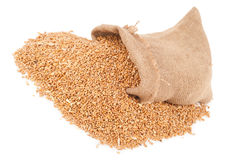 Sack of wheat grains Stock Photography