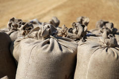 Sack with wheat at outside Stock Photography
