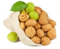 Sack of whole walnut and green walnut fruit Stock Photos
