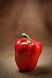 sacking свежего перца предпосылки красный Стоковые Изображения