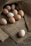 sacking яичек стоковая фотография