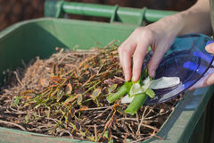 Sacking of organic waste into a green bins Royalty Free Stock Images