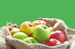 Sacks of apples. Fresh ripe apples on burlap bag from farm Royalty Free Stock Photography