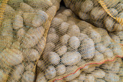 Sacks with fresh new potatoes Royalty Free Stock Photos