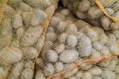 Sacks with fresh new potatoes Royalty Free Stock Photos