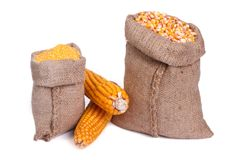 Sacks of grain and groats and corn on the cob Royalty Free Stock Image