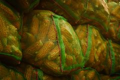 Sacks of Maize or corn drying on roof, rural village,Corn in gre. En sacks,close up Stock Images