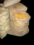 Sacks of maze corn Royalty Free Stock Photo