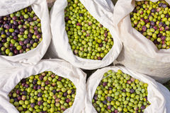 Sacks with Olives royalty free stock photography