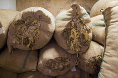 Sacks with raw wool Royalty Free Stock Photo