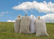 Sacks with wheat Royalty Free Stock Image