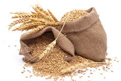 Sacks of wheat grains Royalty Free Stock Photos
