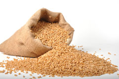 Sacks of wheat grains. On isolated white background Stock Photos