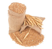 Sacks of wheat grains Royalty Free Stock Photography