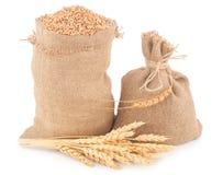 Sacks of wheat grains Royalty Free Stock Photo