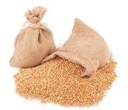 Sacks of wheat grains Stock Image