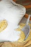 Saco agujereado de grano Fotografía de archivo libre de regalías