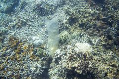 Saco de plástico na parte inferior de mar Lixo na foto subaquática do mar Água do mar com lixo plástico Problema da ecologia fotos de stock royalty free