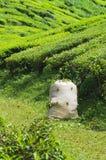 Saco do chá Imagem de Stock