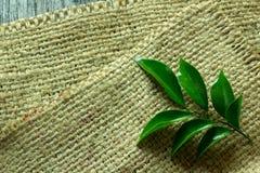 Saco encendido puesto hojas del verde, espacio para los mensajes Fotos de archivo