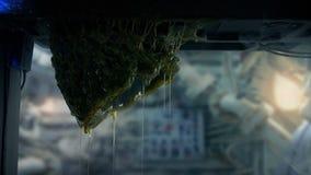 Saco extranjero del huevo en el techo de la nave espacial almacen de video