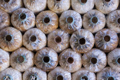 Saco vazio dos cogumelos do close up em uma exploração agrícola Foto de Stock Royalty Free