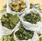 Sacos com as ervas curas do corinto preto, do Linden, da madressilva e da hortelã Fotografia de Stock