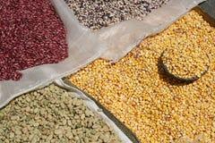 Sacos dos feijões e do milho no mercado de Otavalo Imagens de Stock